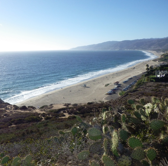 Point Dume View with Cactus