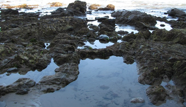 Tide Pools View