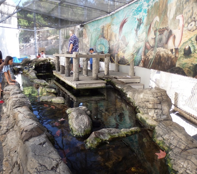 Tide Pool Touch Tank
