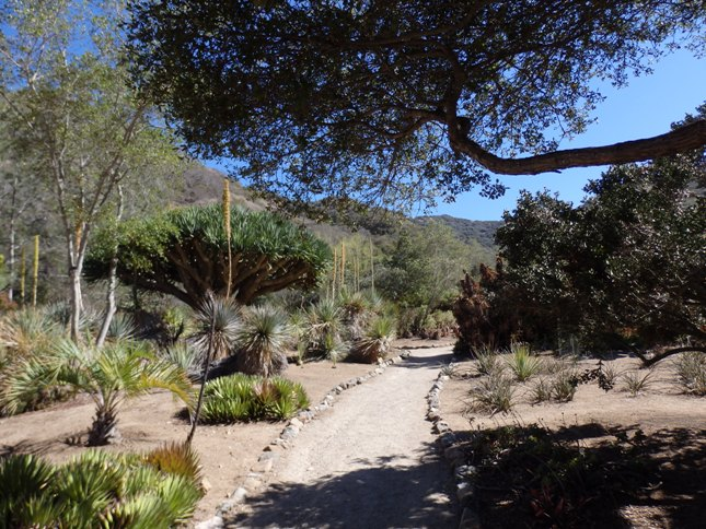 Path Through the Cactus & Succulent Areas